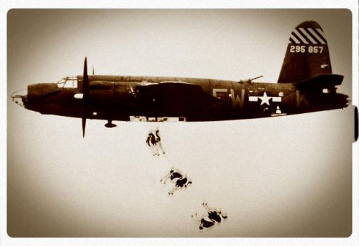 Bombing cows by Bkl-Lifestyle