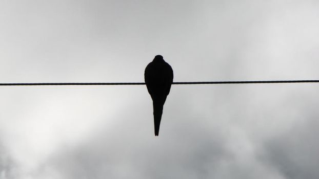 Bird On The Wire by loirn