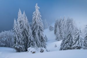 Les sapins by rdalpes