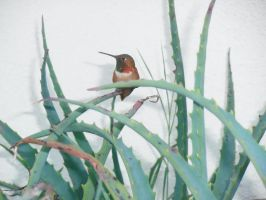 Humming Bird Perch On a plant outside by TheJadedRaven