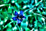 Blue in HDR by Theos-Kengen