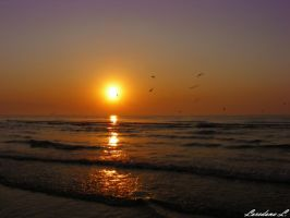 golden sunrise by lorilup