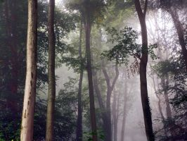 misty forest by all17