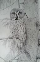 Great grey owl - commission by BeckyKidus