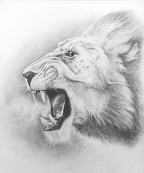 Roaring Lion - traditional by Pencil--Pony