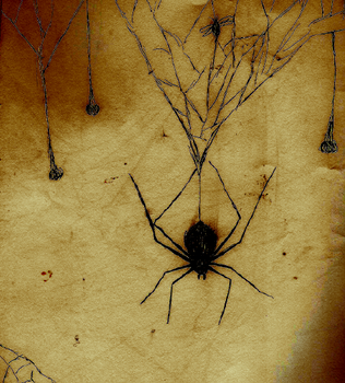 Spider Sketch by Pyragus