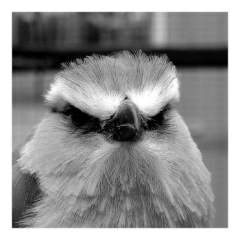 Disapproving Bird Disapproves by hell0z0mbie