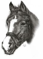 Horse, graphite 24x30cm by 26lisamarie
