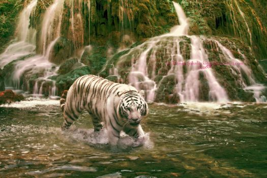 Tigers Love Water by Branka-Johnlockian