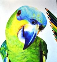 Parrot by alcavym