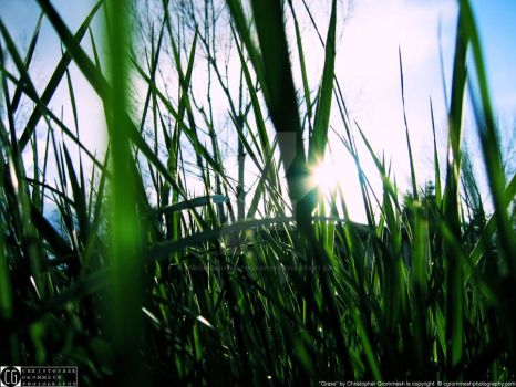 grass by CGrommeshPhotography