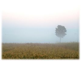 misty morning by hmm---ola