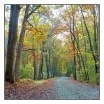 Fall road. img.4.3-11286Oct2016286, with story by harrietsfriend