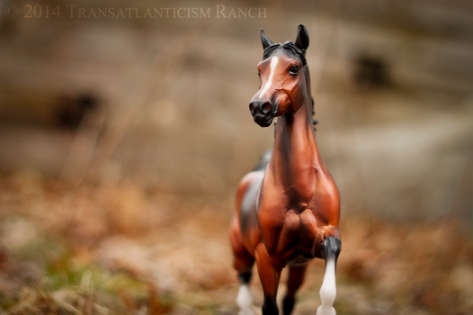 Rites of Spring by TR-Ranch