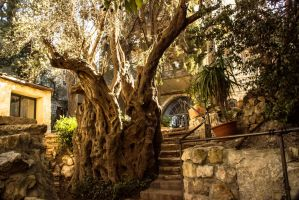 Old tree in an old building by ShlomitMessica