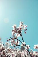 Cherry Blossom I by FearlessMagician