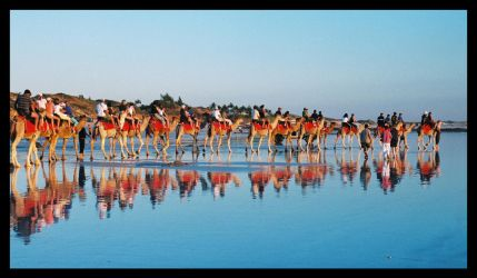 Camels on Cable Beach 5 by wildplaces