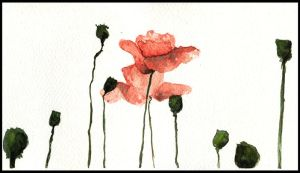 Poppies by isasofus