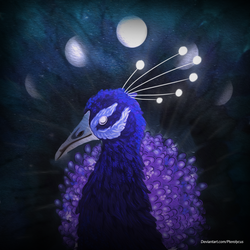 Lunar Peacock by Pterolycus
