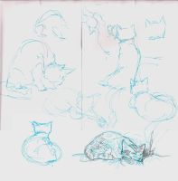 Kitten Sketches by vimfuego