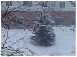 2010 15 02 Snow Pictures 00 by lilly-peacecraft