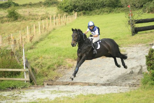 Cross country 06 by Kennelwood-Stock