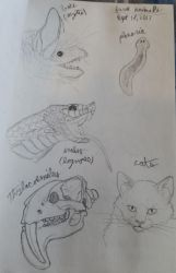 Fave Animals by Dragimal