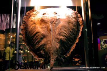 Parni, The Late Giant Whipray by bedeviere
