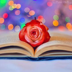 Romantic book by FrancescaDelfino