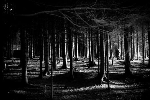 The Woods by PonderStibbons