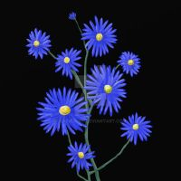 Blue Asters by katiejo911