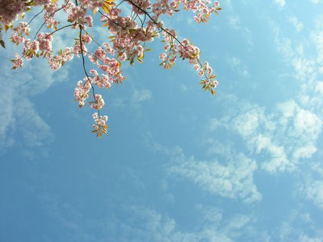 Trees and sky by photo-lister