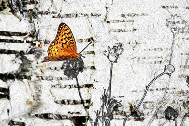 Butterfly by artisticimposter