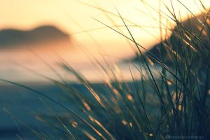Cannon Beach - Beach Grass by pyro303