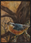 aceo nuthatch -for paintbigflowers by kailavmp