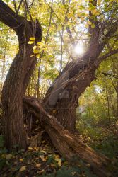 Soul of an old tree by Luisa-Puschelova-7
