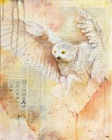 The Owls Are Not What They Seem (I) by bedowynn