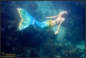 the mermaid 3 by Official-AmyFantasy