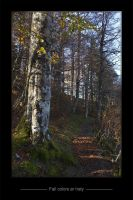 Wandering in Iraty Forest by rmotfage