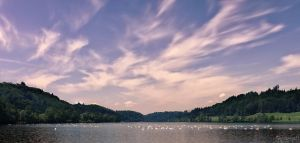 Wohlensee Swan Congregation by LeWelsch