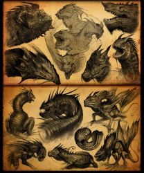 Dragon Sketches by lordeeas