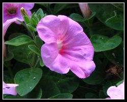 Pink Flower by Gyroid