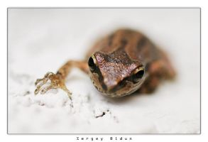 FROG by sergey1984