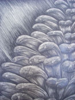 pinecone scratchboard by mikicartel