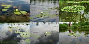 White Water Lilies pack by Comacold-stock