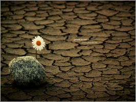 growth to last by breaked