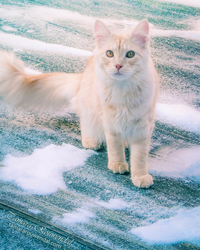 Winter Paws by TammyPhotography