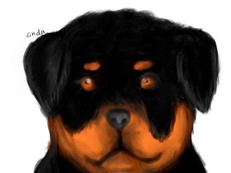 Rottweiler Doge2 by linlin7805