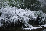 Snow in the Park by NicamShilova