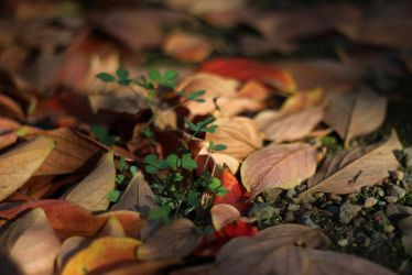 Fall Clovers by AtomicBrownie